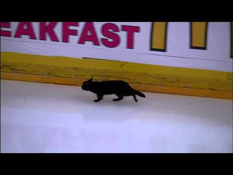 Black cat runs across ice, spells bad luck for Sharks