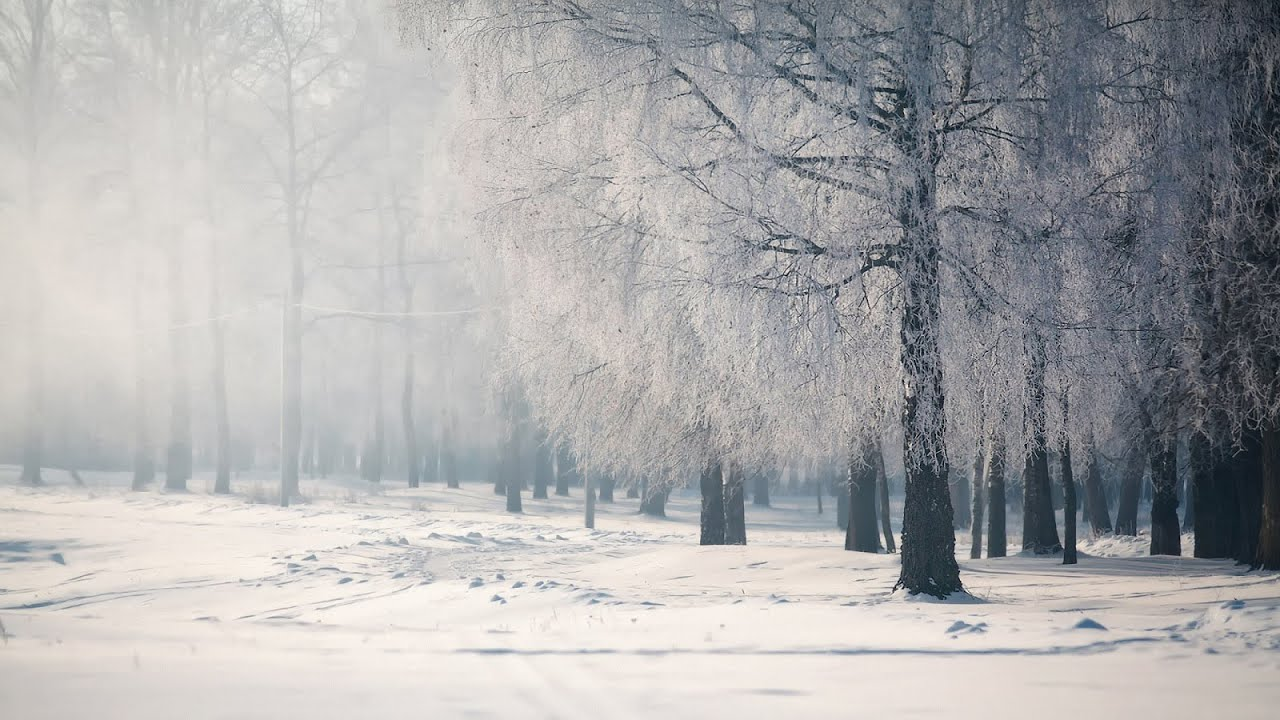 Live Winter Snow Fall Background Wallpaper Sad Japanese Music Falling Snow Youtube
