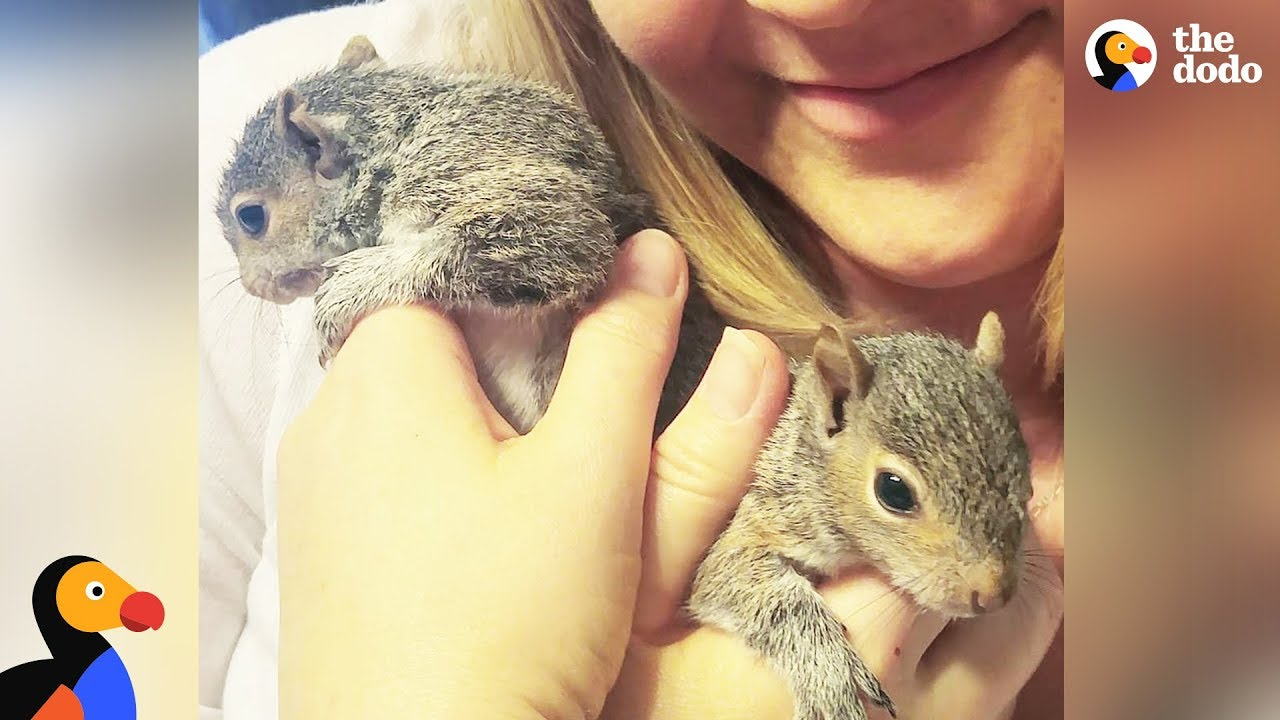 Rescue Squirrel Visits Rescuers with Her Babies