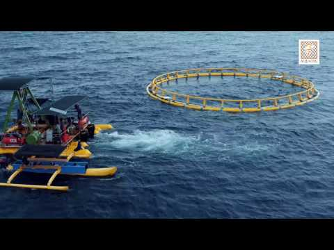 Offshore Submersible Cage Aquatec