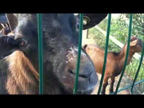Grădina Zoologică Ploieşti