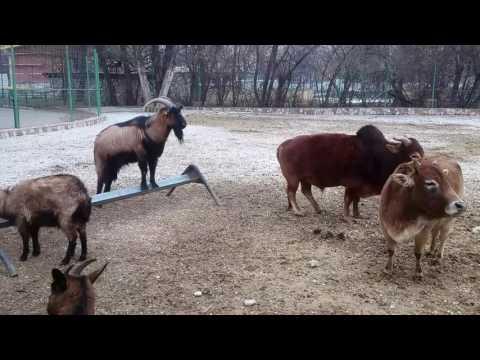 Zoo Skopje Kopshti zoologjik ne Shkup