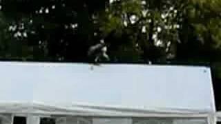 roofvogelshow op camping de vier bannen