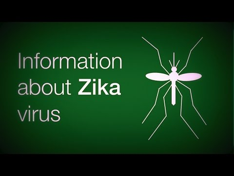 Zika Virus In USA: First Case and History (Full Report)