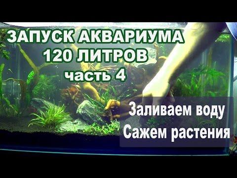 Запуск 120 литрового аквариума. Часть 4. Заливаем воду. Сажаем растения