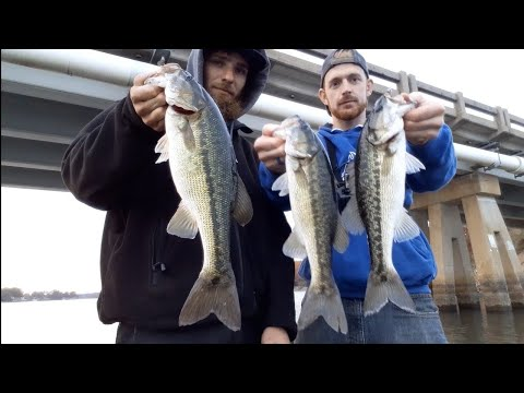 Deep Fishing Vs Shallow Bass Fishing (which Is Better) Lake Norman