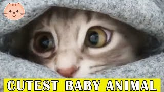 Cute Baby Animals Video Compilation Cute Moment Of The Animals - Cute Baby Animals #1 | Cute Dose