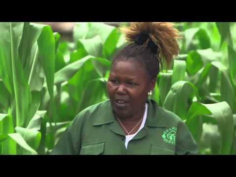 Shamba Shape Up (Tanzania) - Chicken, Horticulture, Maize, Post Harvest Losses