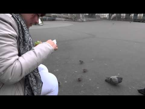 Ale y los Pajaritos de Paris