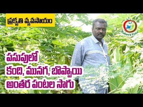 Zero Budget Natural Farming | Papaya,Redgram,Moringa as Intercrops in Turmeric