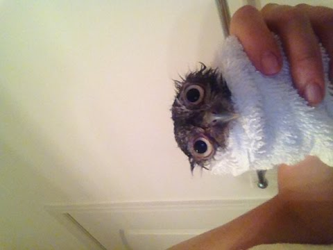 how to take care of a baby owl