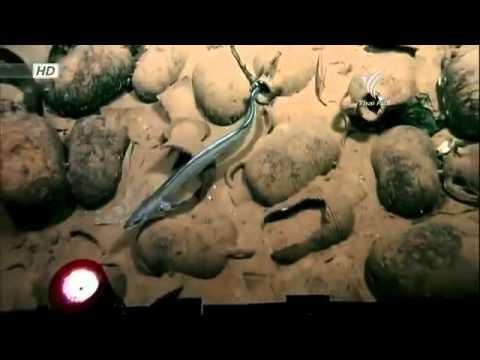 [สารคดี 50] ท่องโลกกว้าง ตอน ซากจากทะเลลึก