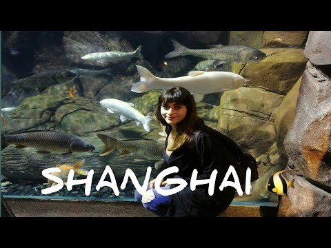 Shanghai, China Day 1,Part 1:Vacation Day 3