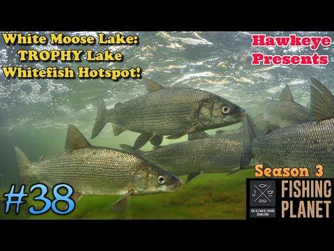 Fishing Planet   #38 - S3   White Moose Lake: TROPHY Lake Whitefish Hotspot!