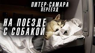 Переезд Пигановых из Санкт Петербурга в Самару на поезде с собакой