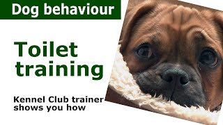 Toilet Training for Puppies - Dog behaviour therapy