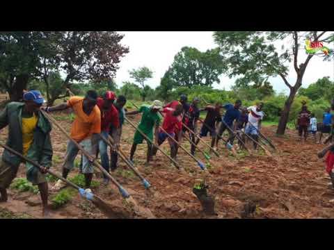 CAMPAGNE AGRICOLE À BIGNONA