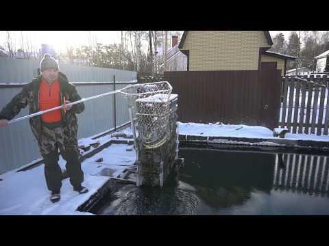 Видео: Осетры в искусственном пруду зимой