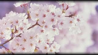 ユーミンから「春よ、来い」のカラオケを作りました。 作詞:松任谷由実 ...