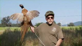 Official Ojai Valley Taxidermy TV Commercial thumbnail