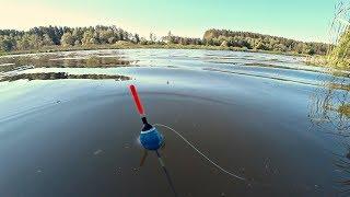 Рыбалка туманным утром на поплавок. Ловля на маховую удочку.