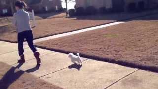 Puppy follows me