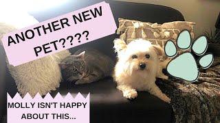WE GOT A NEW DOG!! (vlog #7)