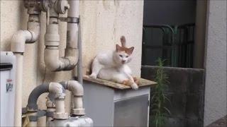 「なに見てんだよ…」なネコ thumbnail
