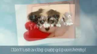 Puppy Potty Training Tips | Puppy House Training Tips |  Labrador Puppy Training Tips | Crate