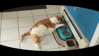 котики приколы подборка 2017 август | кошки приколы с музыкой | кошки мяукают видео | ленивые коты