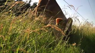 Cows in the Meadow [SIV RAW FOOTAGE]
