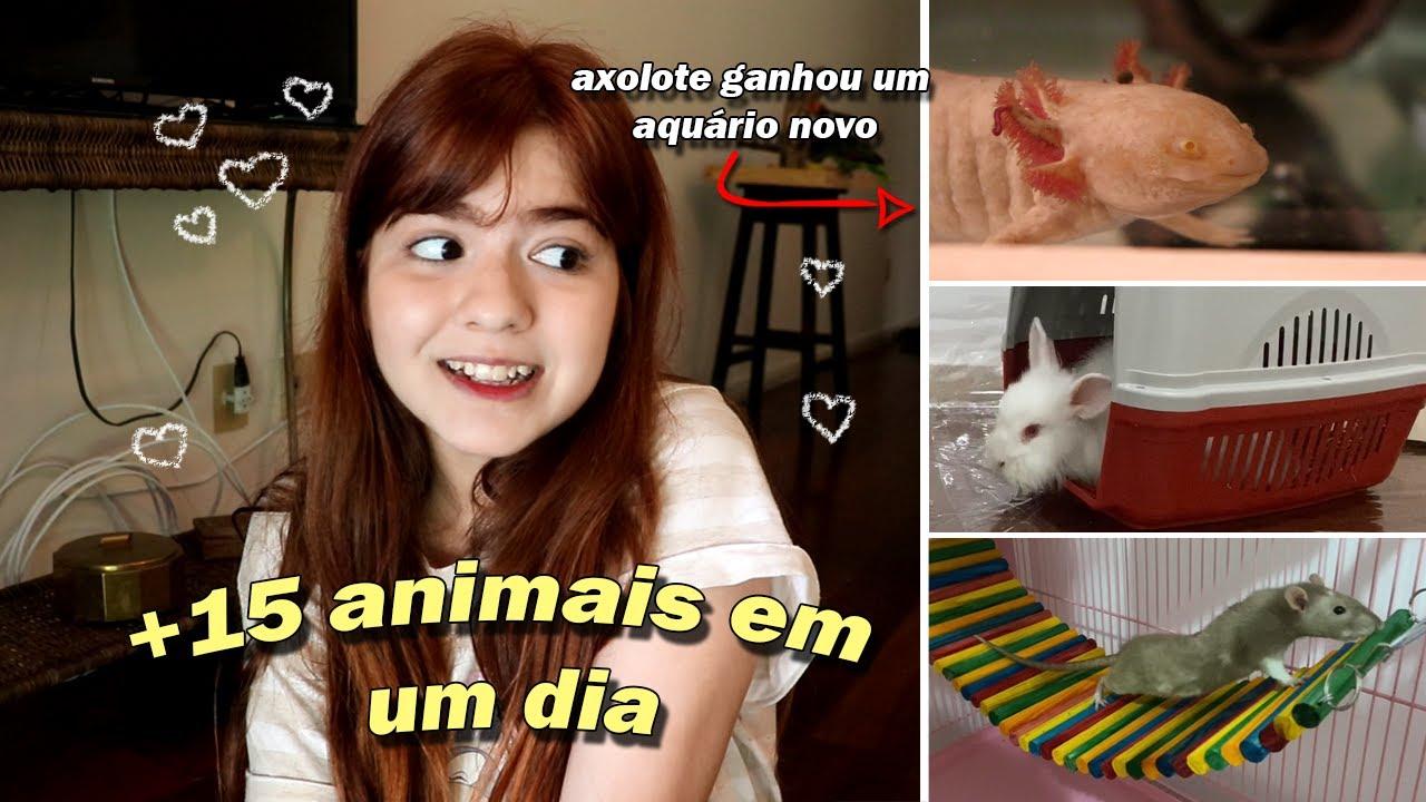 LEVANDO OS ANIMAIS PARA O APARTAMENTO NOVO (parte 1) I Vlogzinho de Mudança