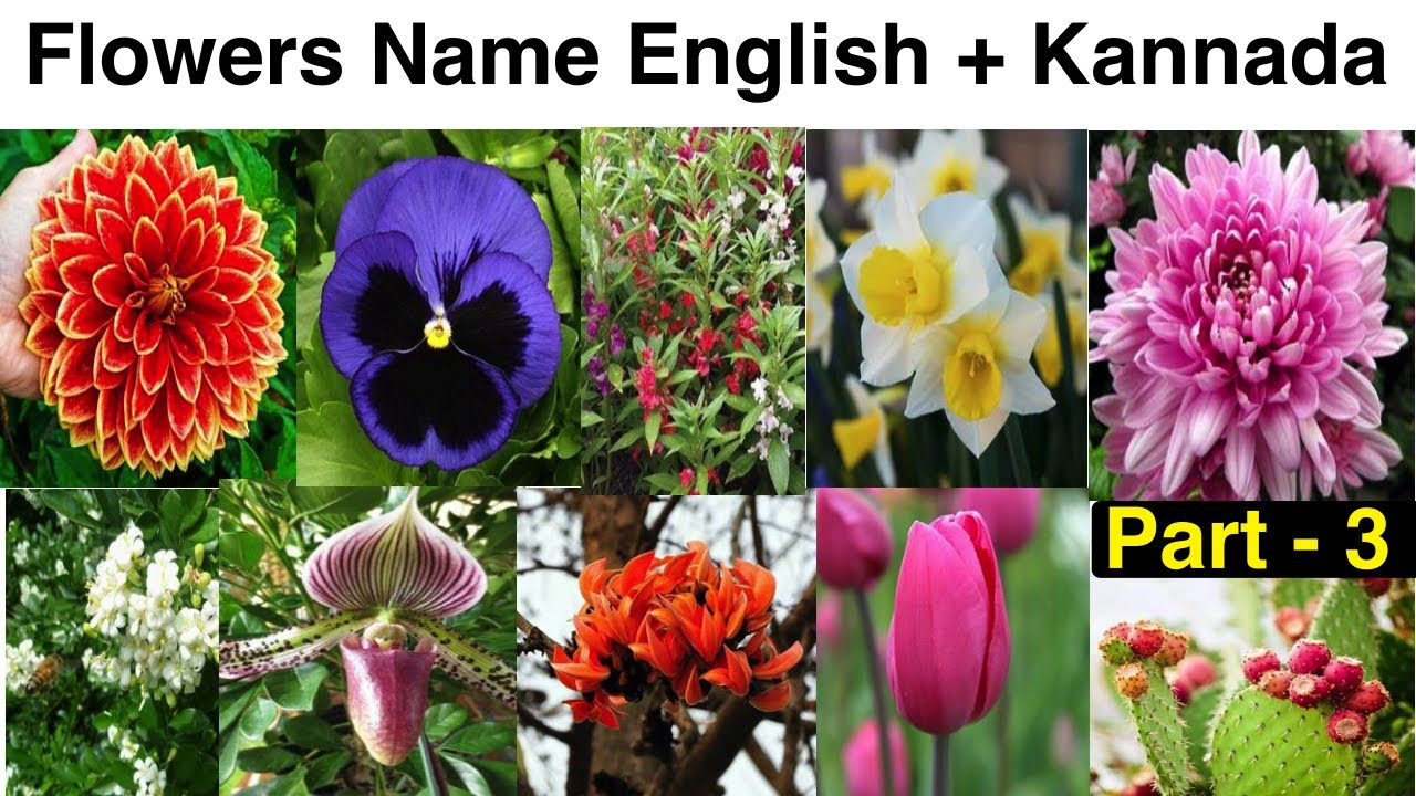 Flowers Name In English To Kannada Part 3 Youtube