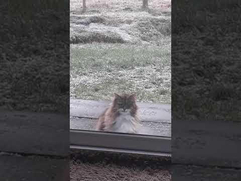 Funny - Cat KNOCKS On The Door!!