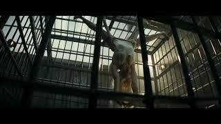 Музыка харли квина из фильма