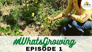 #WhatsGrowing | Episode 1 [07.05.2020]