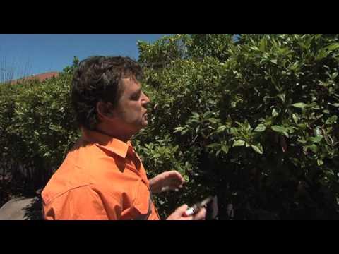 Tim Davies Landscaping - Gardening Tips - Activ Foundation respite home in Bayswater