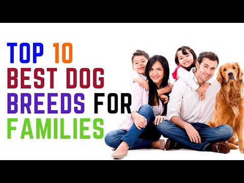 Top 10 Recommended Dogs for Families