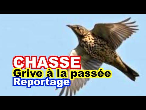 CHASSE : La Grive à La Passée.