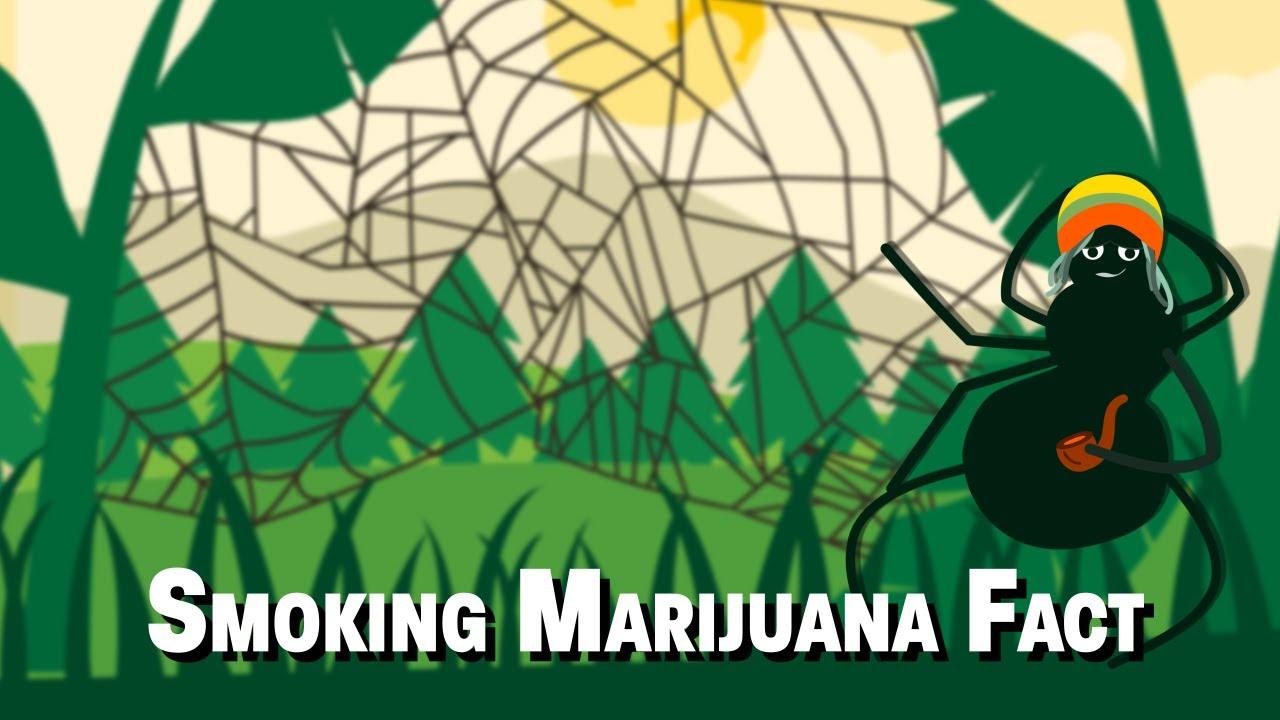 45 Interesting Marijuana Facts | FactRetriever com
