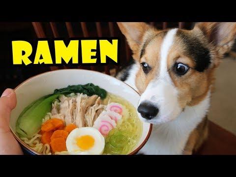 CORGI RAMEN - Homemade DOG Friendly DIY    Life After College: Ep. 567