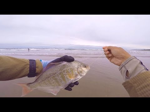 Surf Fishing Low Tide on the Oregon Coast