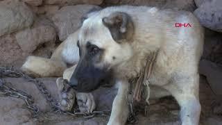 Köpeğe Tecavüz Ederken Yakalandı, Köylüler Tepkili