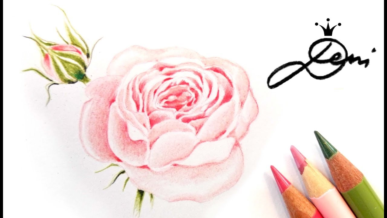 Rose Zeichnen Lernen Edelrose Malen How To Draw A Rose как се рисува роза