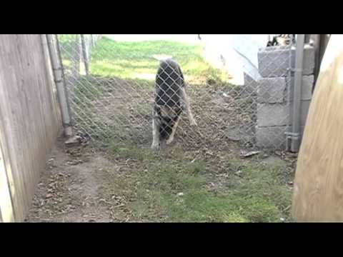 how to keep dog from going under fence