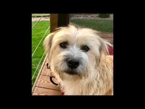 Dog Video For Emma Mertens