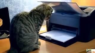 Забавные кошки. Хорошая подборка приколов самых смешных кошек.