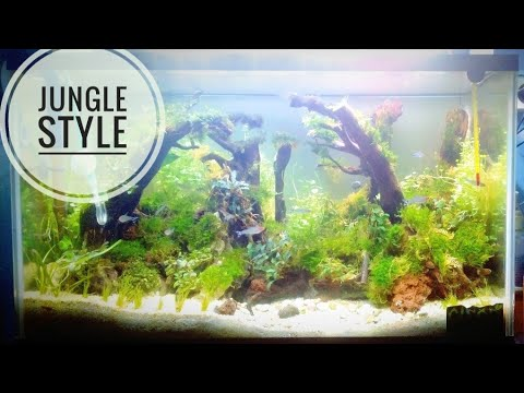 How to make aquascape for beginners - YouTube