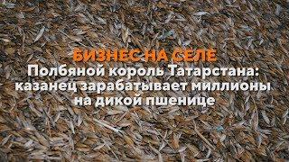 Бизнес на селе # 37. Как татарстанец возродил в России полбу и стал миллионером