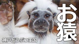 """神戸市中央区『神戸どうぶつ王国』 熱帯の森の""""ちいさなお猿さん""""たち♡ ..."""